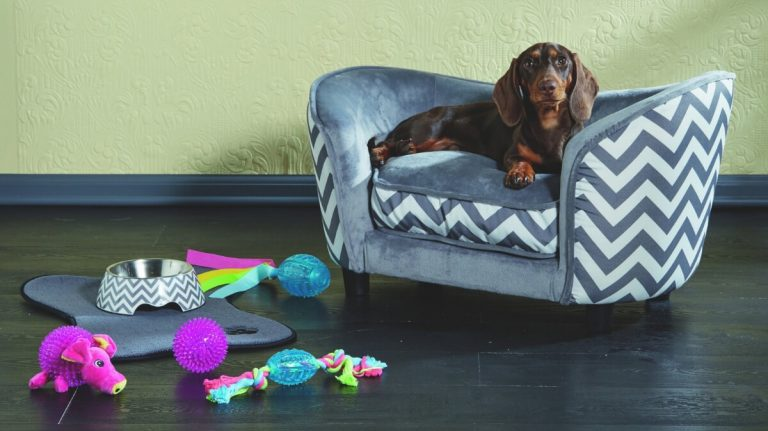 basset hound dog sitting in sofa with toys