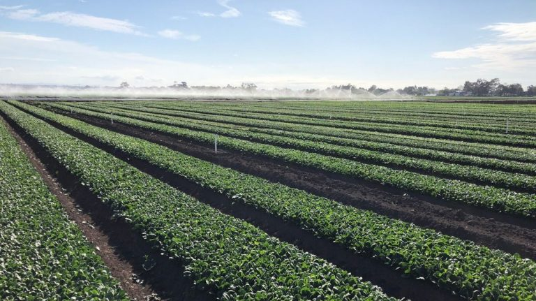 Eat your baby spinach and support Australian growers