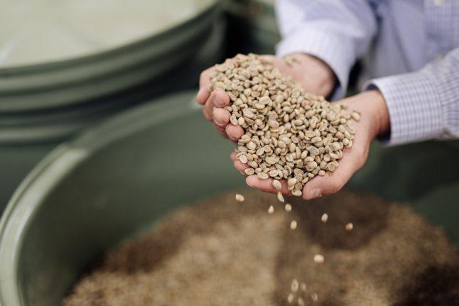 Black Bag Roasters coffee bean