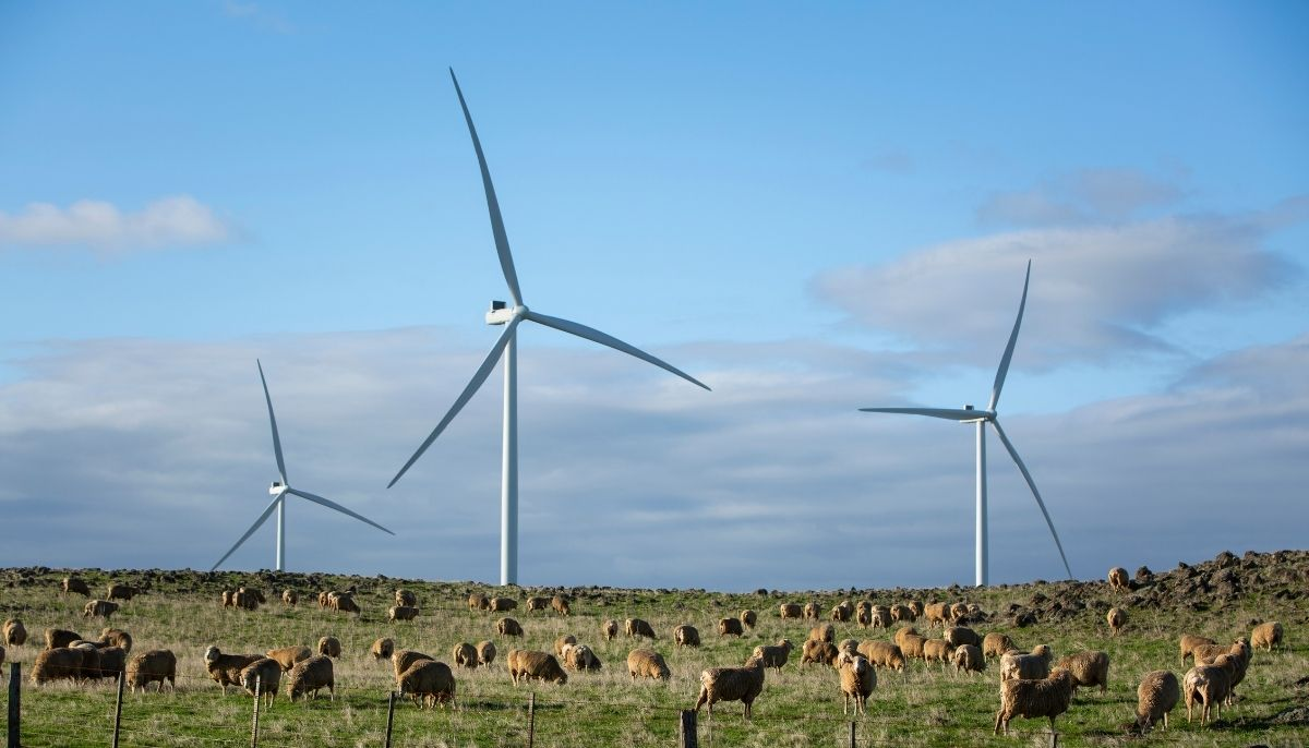 ALDI harnesses clean power completing its renewable electricity transition